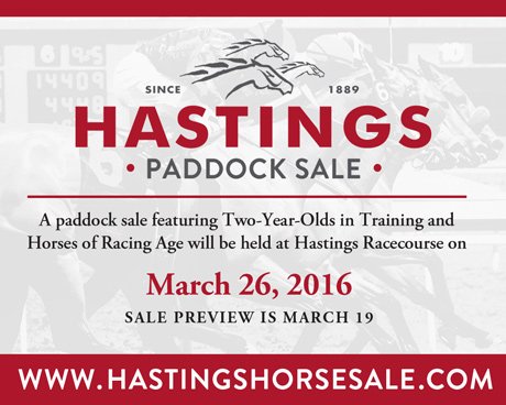 Hastings Horse Sale 2016